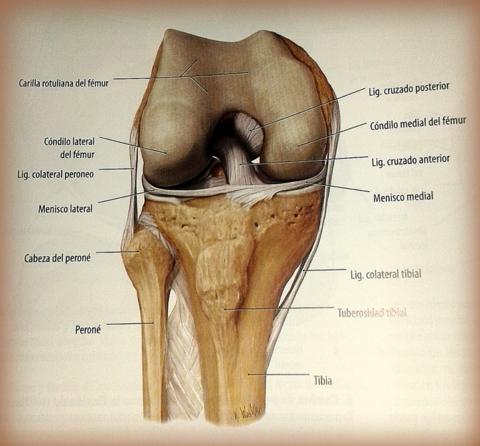 anatomía Archivos - Página 7 de 10 - Carlos López Cubas